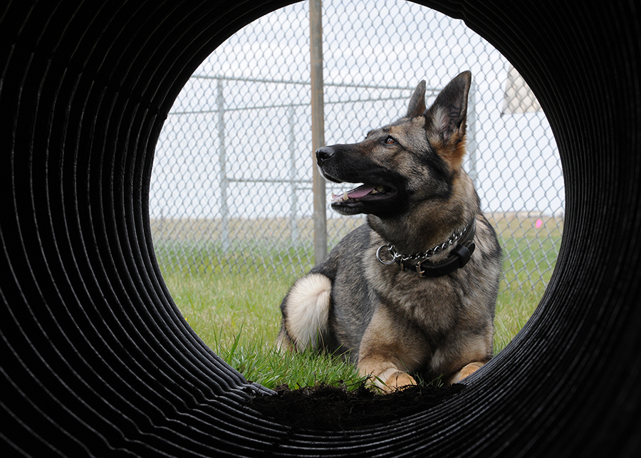 Gina Missile Security Dog - Malmstrom AFB